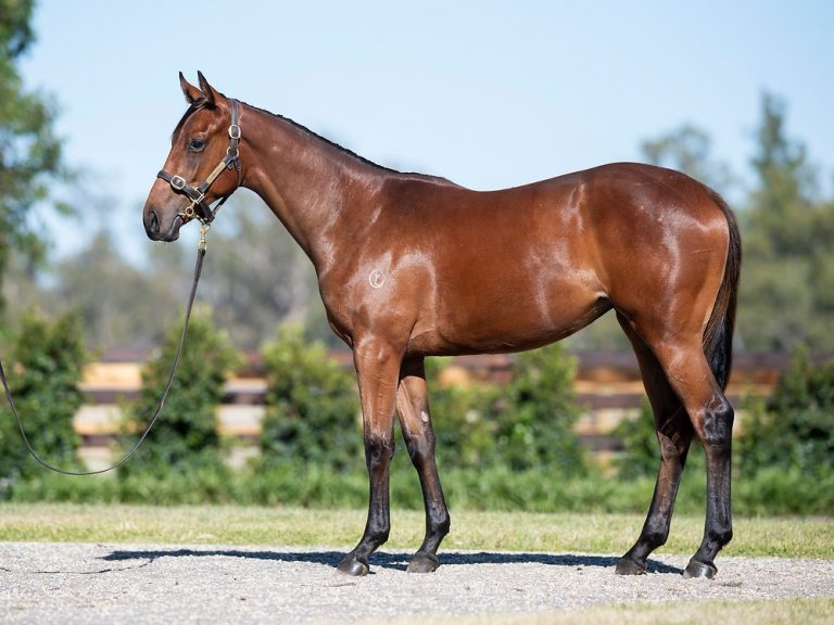 2021 MAGIC MILLIONS YEARLING SALE