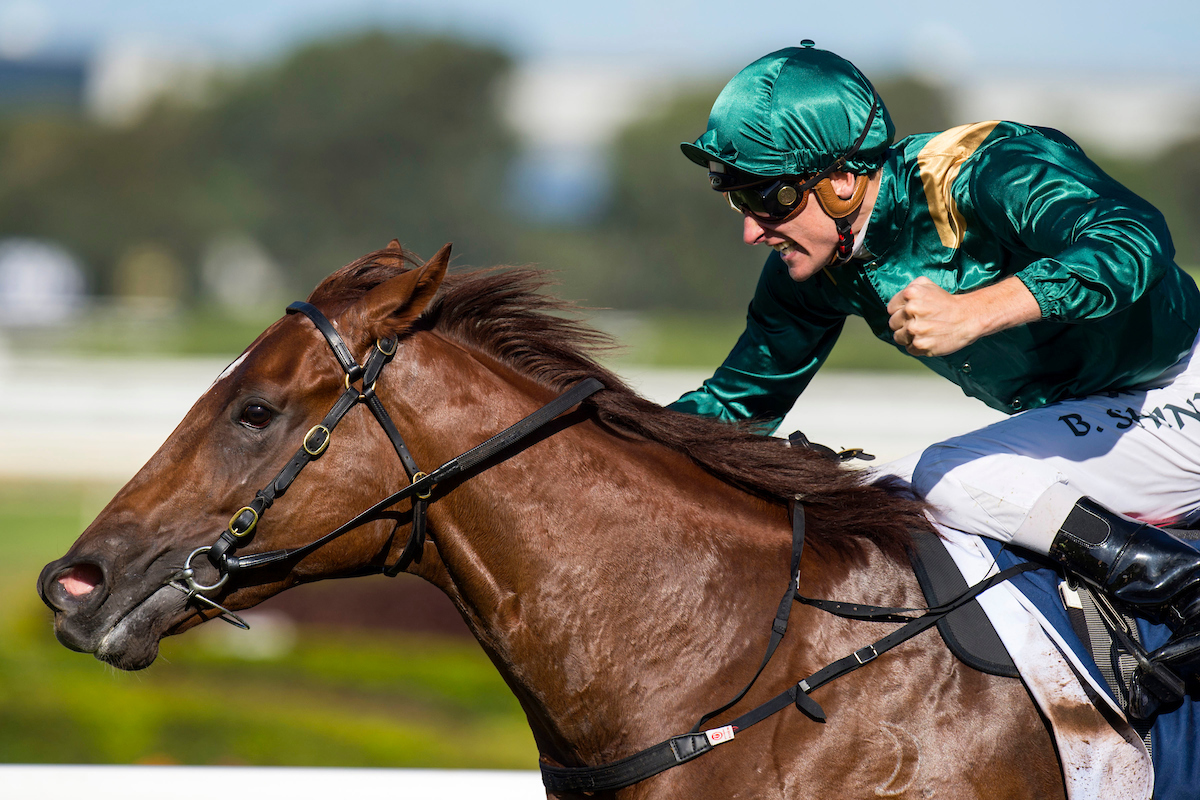 SYDNEY, Australia:  CAPITALIST (Written Tycoon - Kitalpha) wins the G1 Longines Golden Slipper at Rosehill Gardens Racecourse on Saturday 19 March 2016.  Ridden by Blake Shinn.  Trained by Peter and Paul Snowden.  Photo - Bronwen Healy.  The Image is Everything - Bronwen Healy and Darren Tindale Photography.