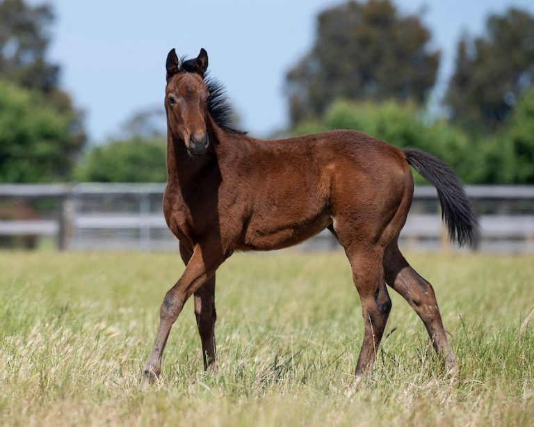 Bay S20 filly ex CINEMATIC x GRUNT. DOB 10 August.