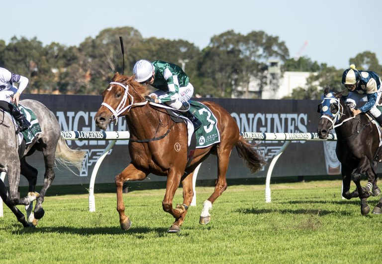 Hungry filly eats up middle distance for Vinery glory