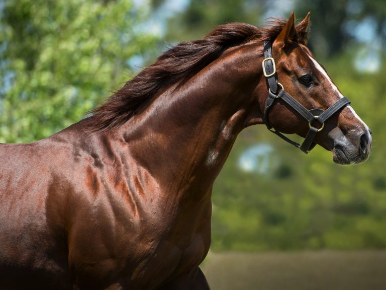 Written Tycoon joins Yulong Stud roster